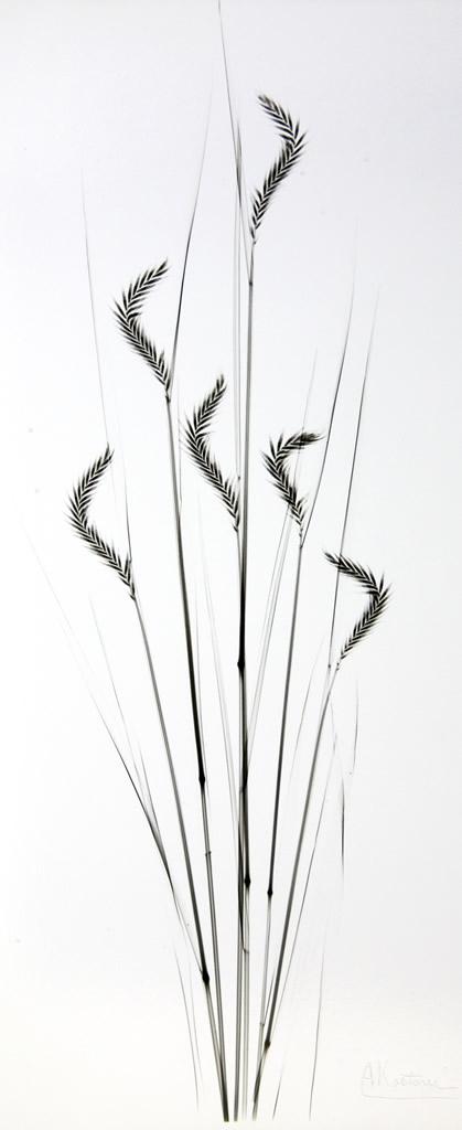 Grass L278