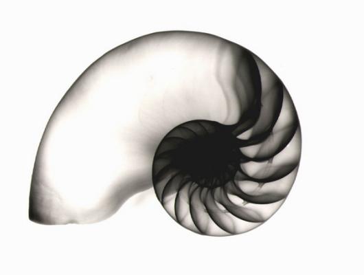 Nautilus F27