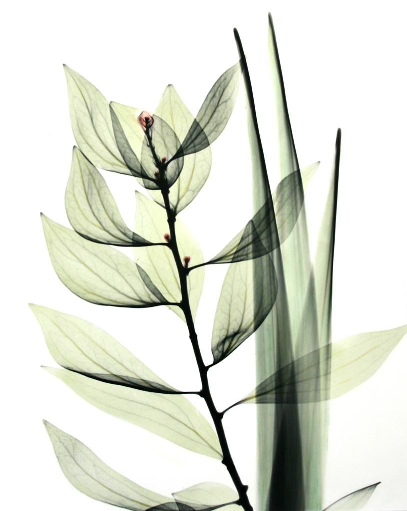 Leaf Composition L177 Color