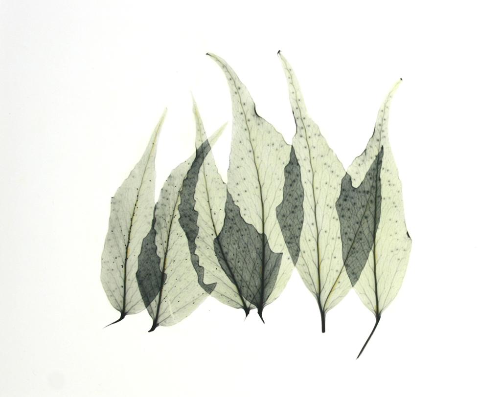 Japanese Fern Leaves E120 Color