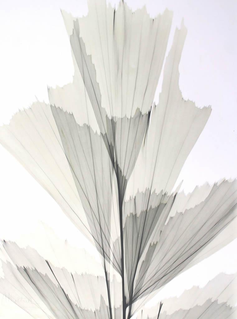 Fishtail Palm L137 Color