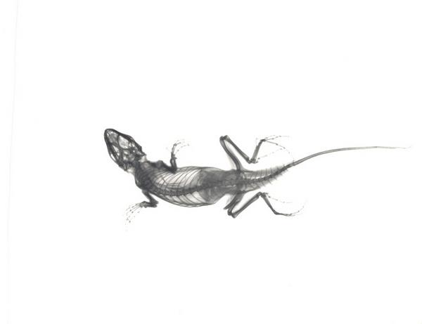 Lizard with a Broken Leg F19