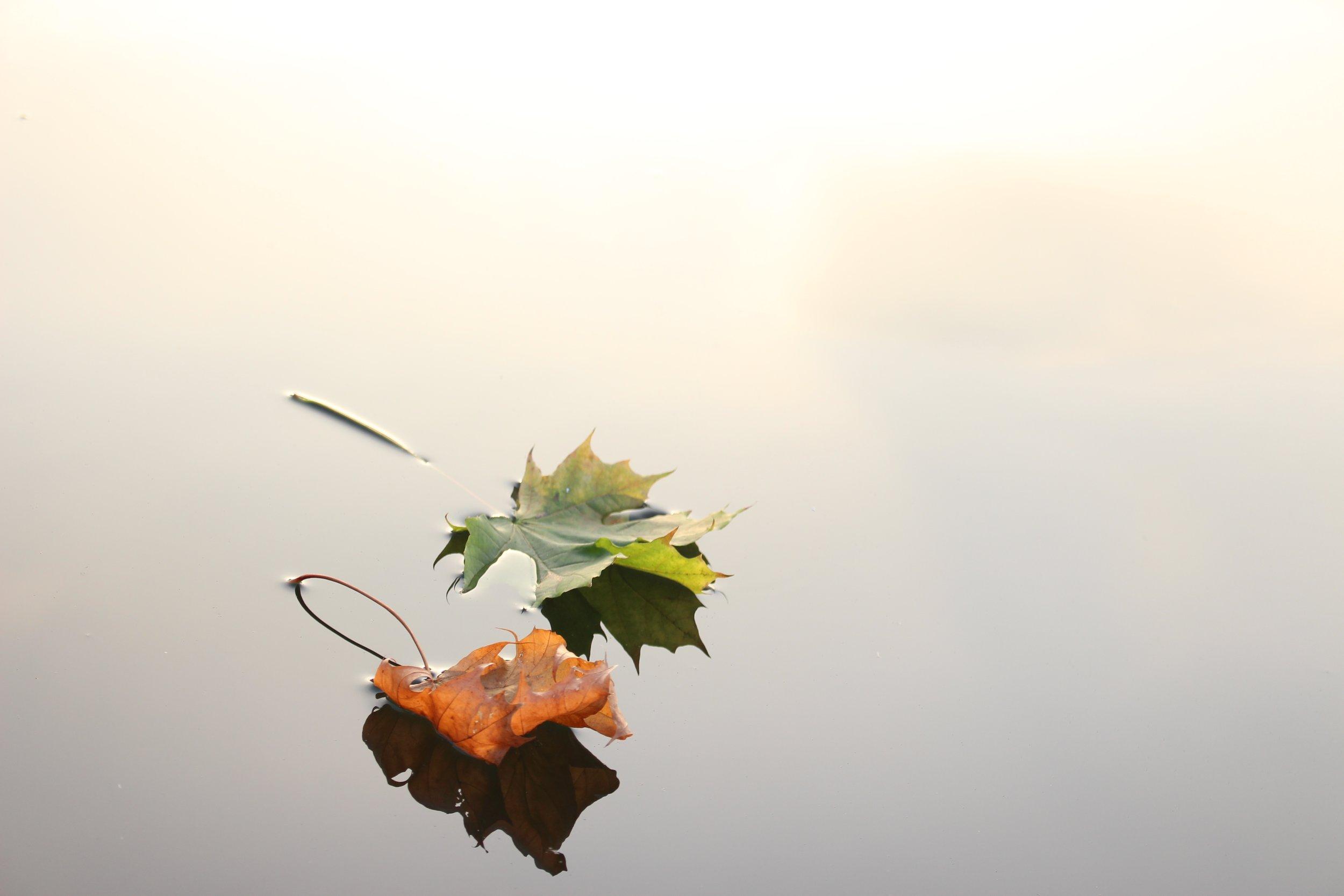 two leafs.jpg