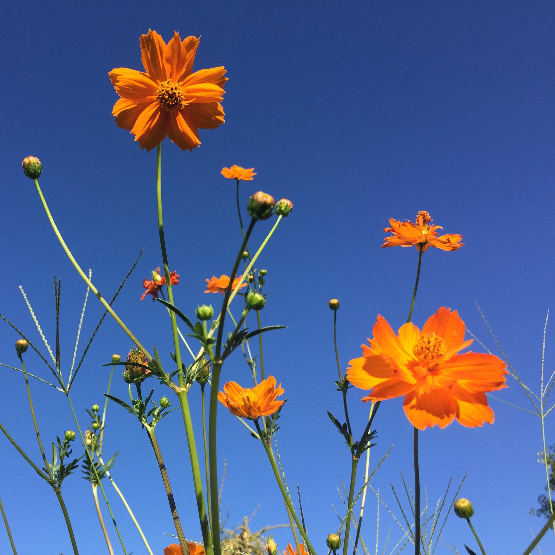 Ntran_Floral