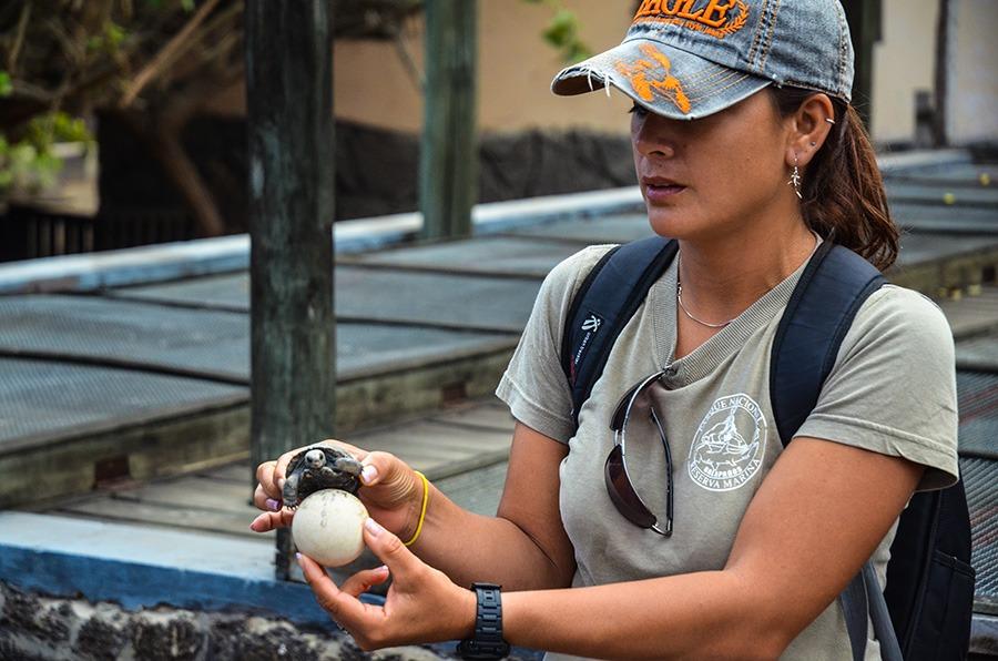 Tortoise conservation centre