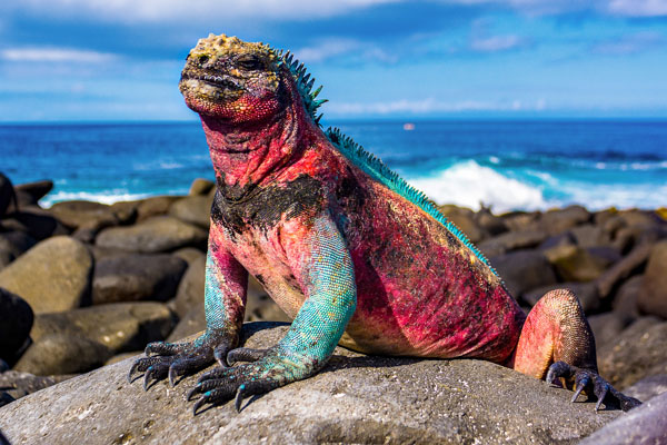 Red iguana.jpg