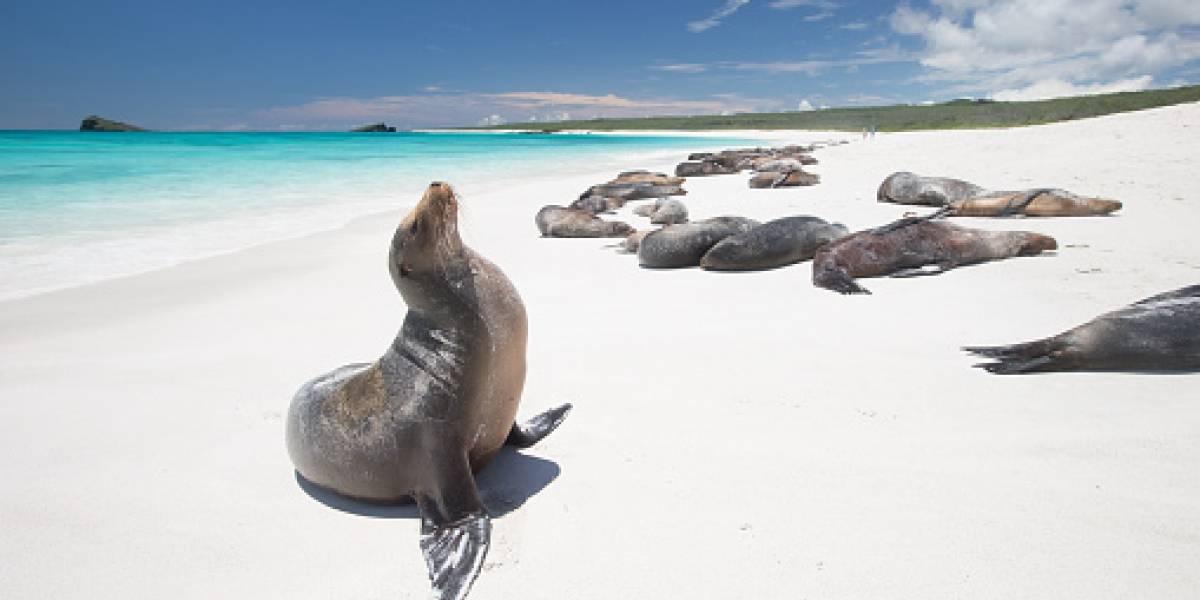 Seal pose.jpg