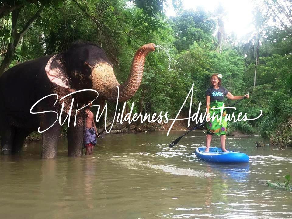SUP Wilderness Adventures Sri Lanka elephant.JPG