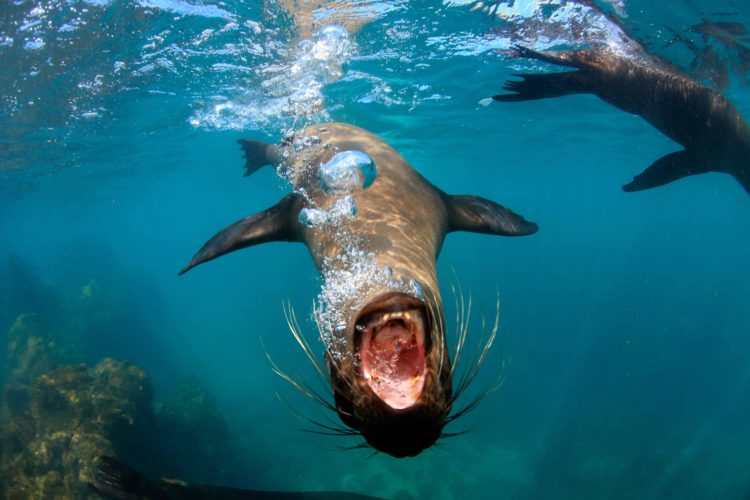 045-kicker-rock-sea-lions-750x500.jpg