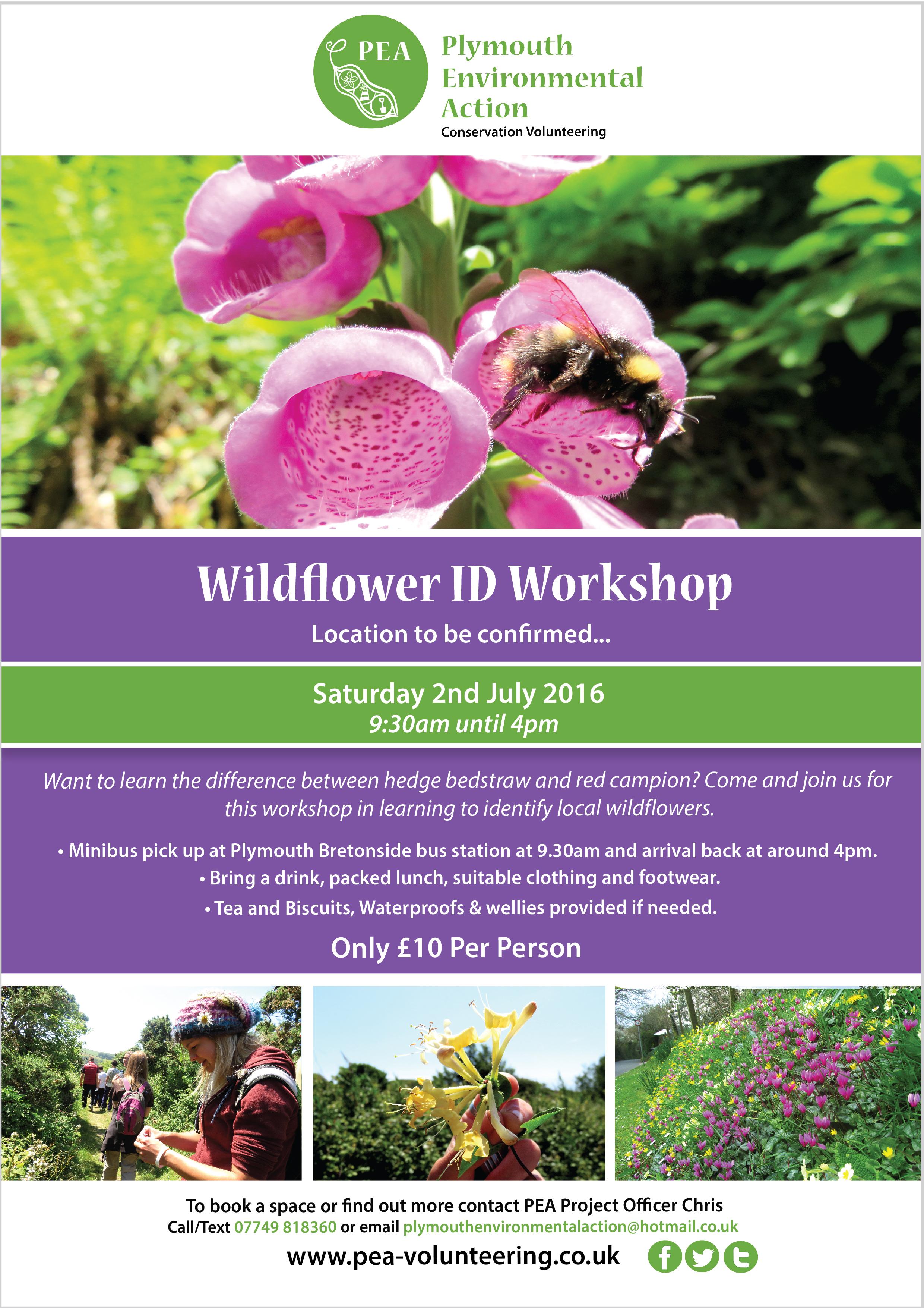 PEA-Wild Flower 2nd July-01-01.jpg