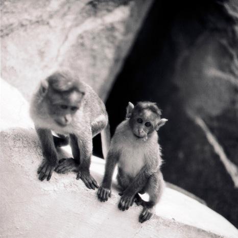 monkey+.jpg