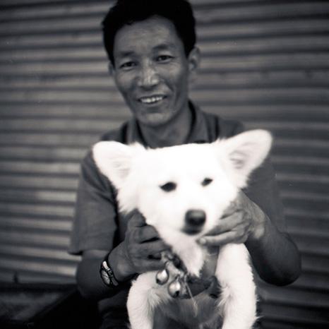 tibeter_hund.jpg