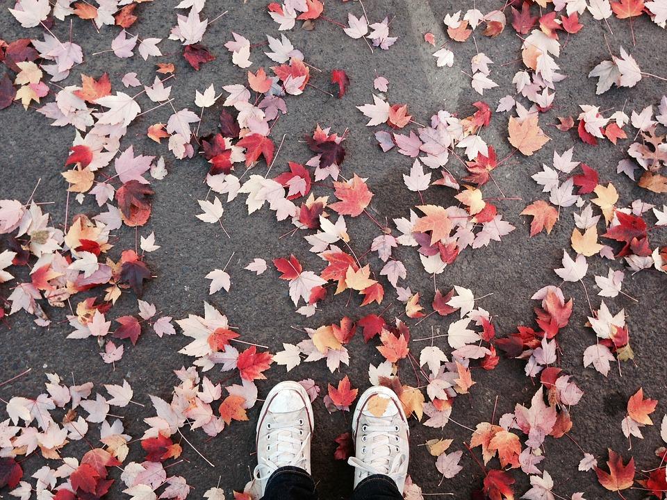 Pixabay 11 Blätter auf dem Boden.jpg