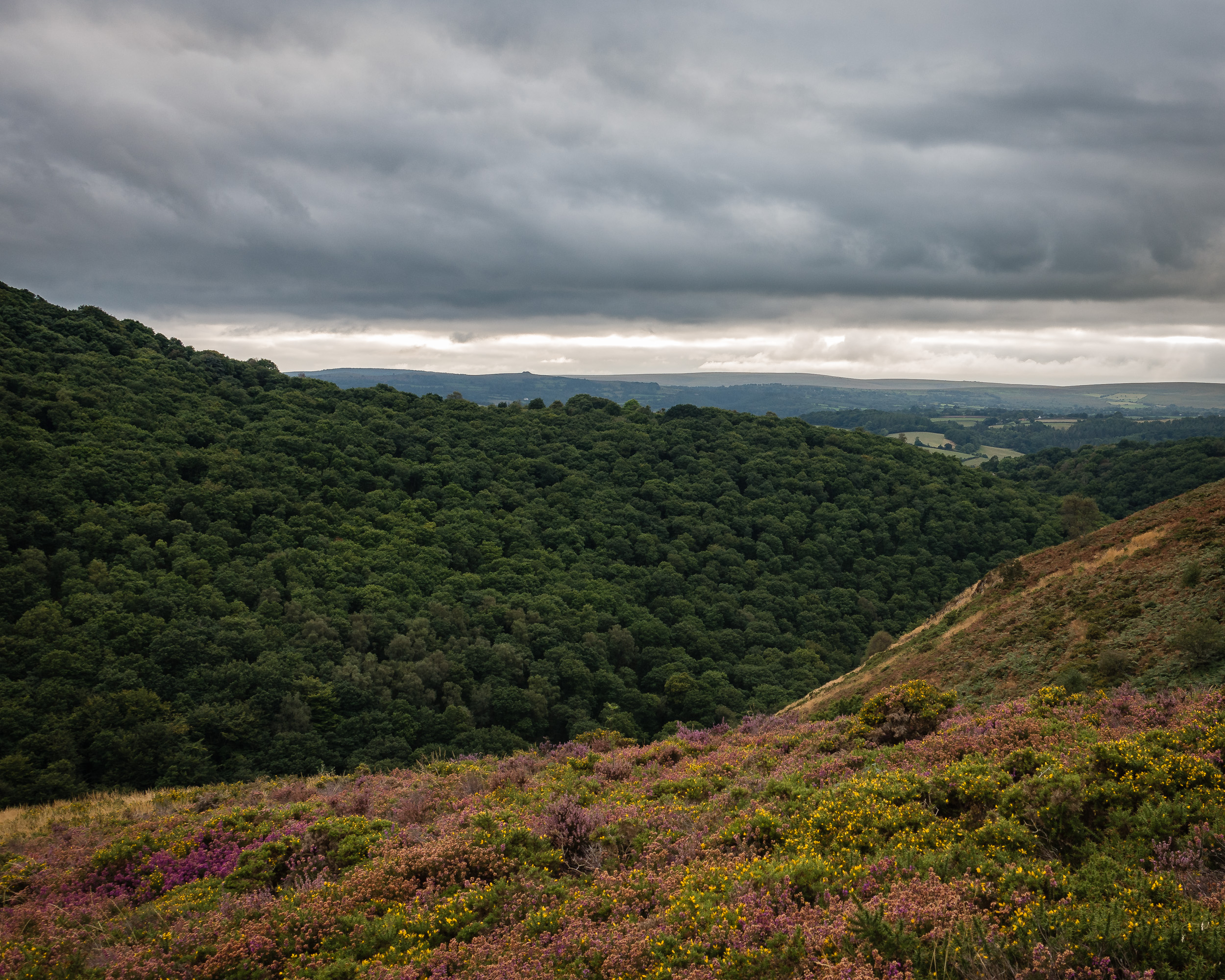Teign Valley Looking West