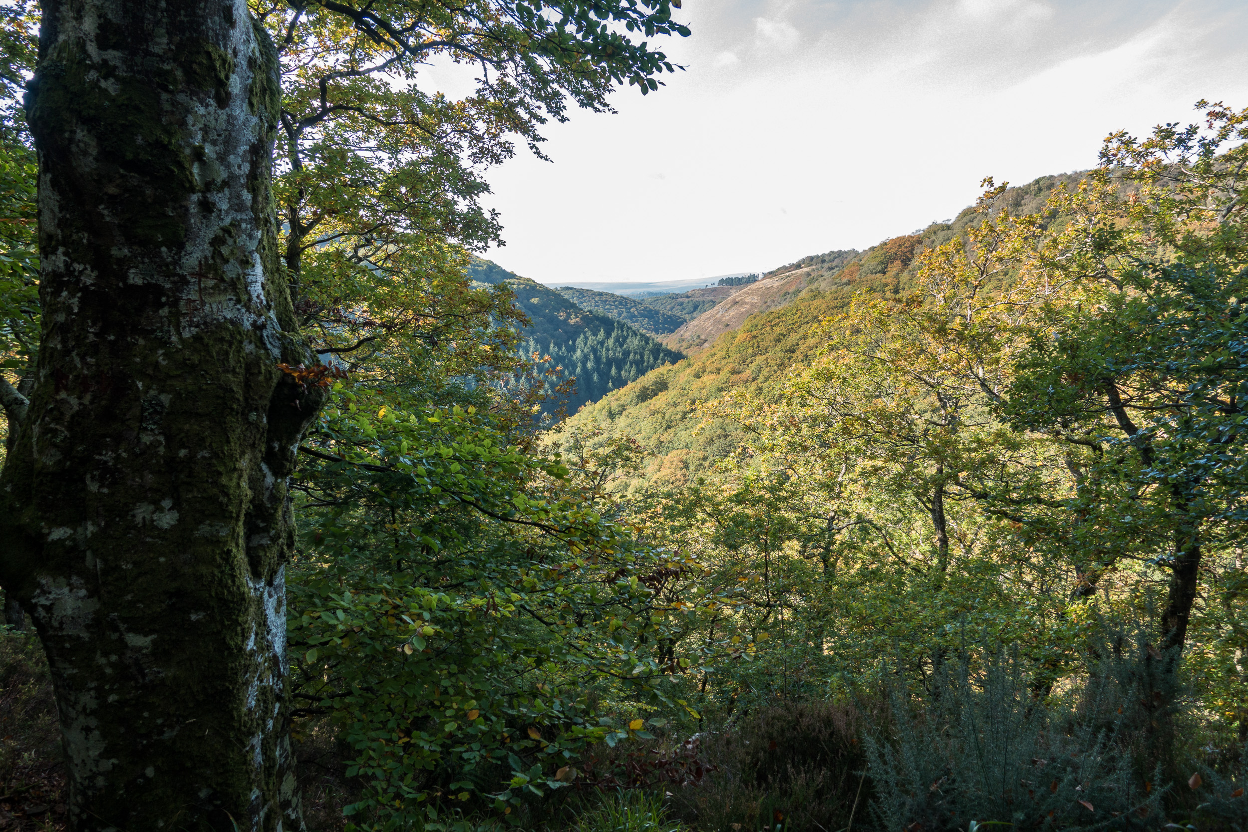 The Teign Valley - a place I love to photograph.