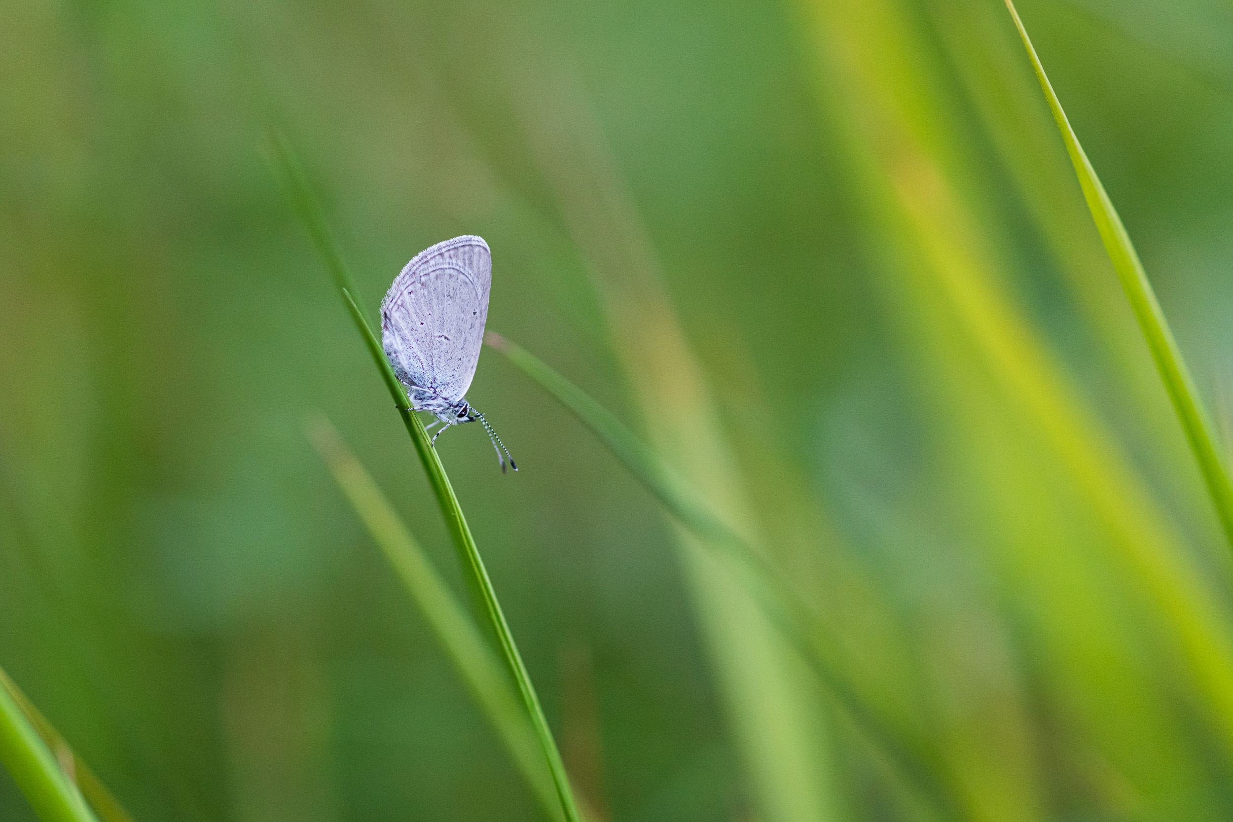 Small Blue, Devon  - Nikon D850, Zeiss 100mm f/2 at f/2.8, 1/160th second at ISO 2000