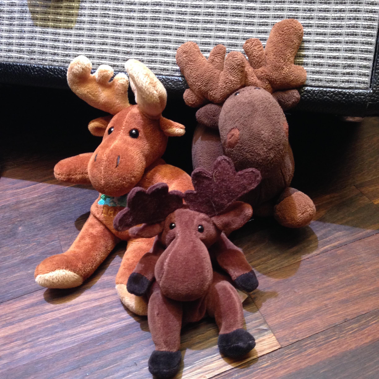 moose family.jpg