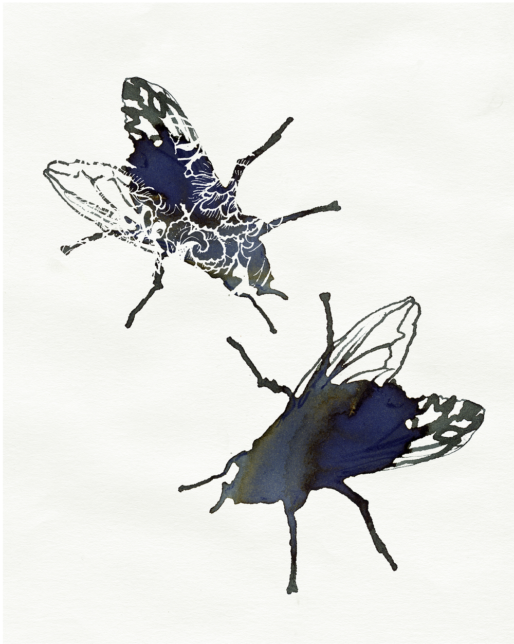 fly illustration