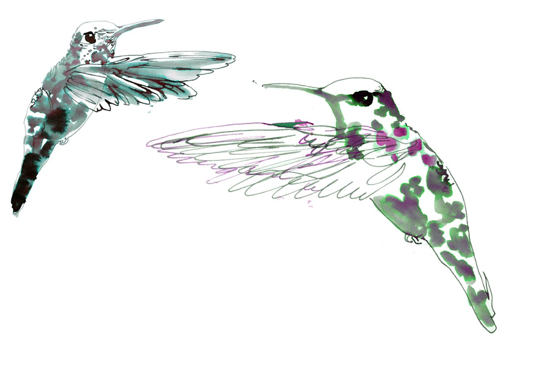hummingbirds illustration