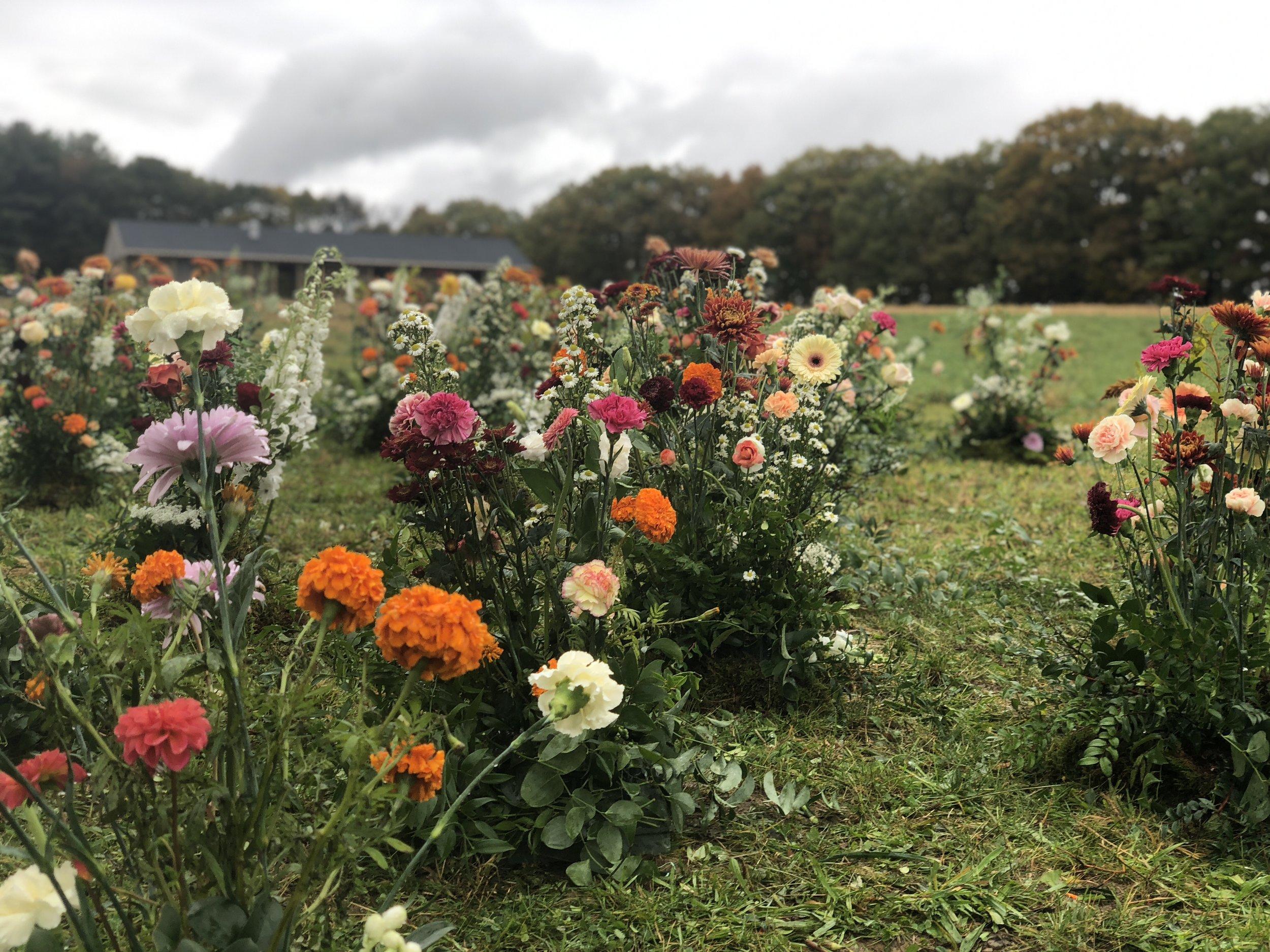 Hudson Botanica Florals