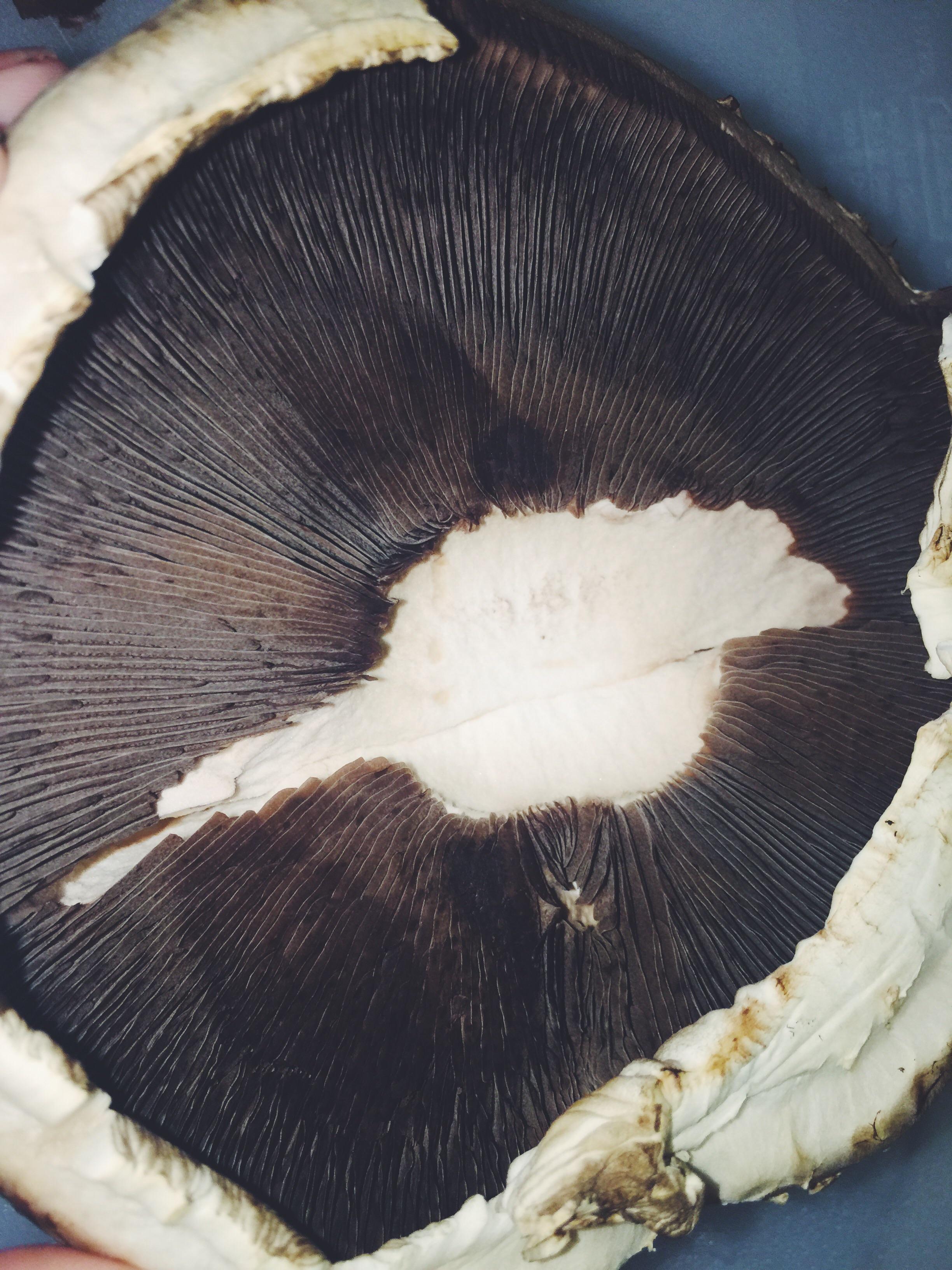 mushroom with gills