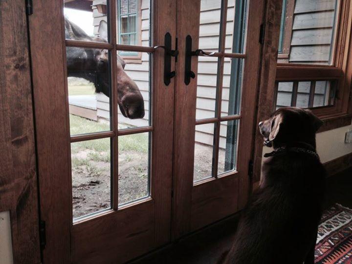 Jack.moose.jpg