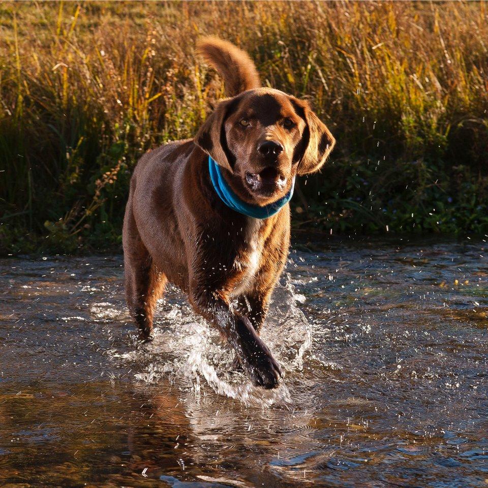 jumpin.jack.splash.jpg