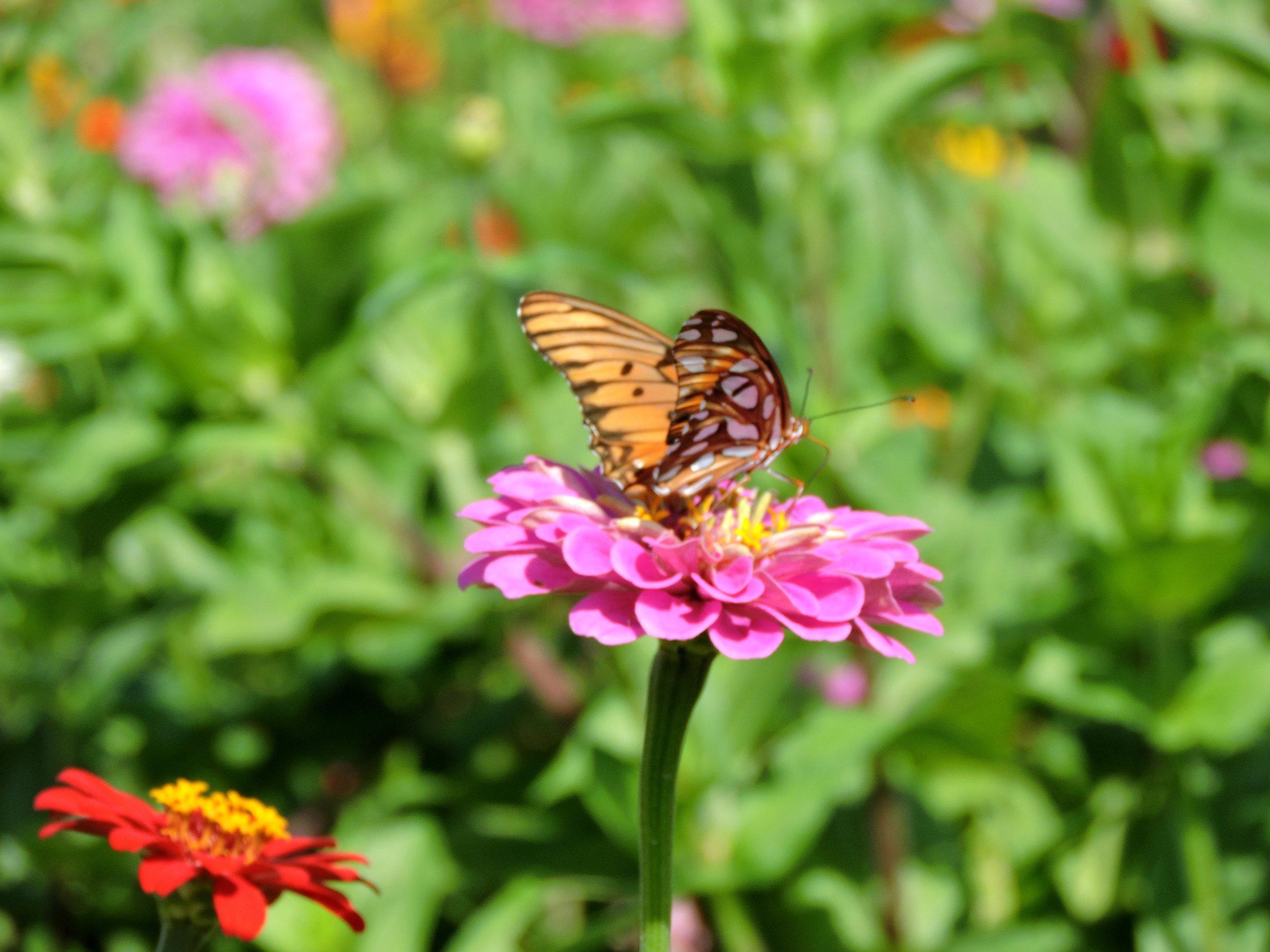 ButterflyGarden.jpg