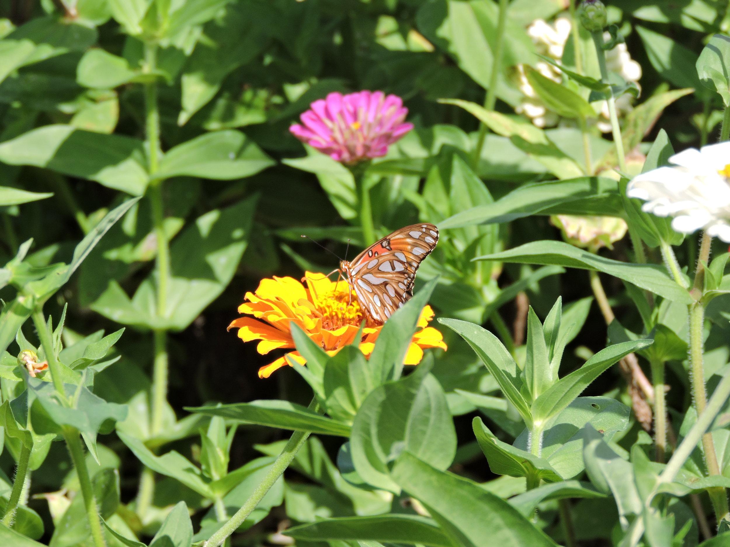 ButterflyGarden2.jpg