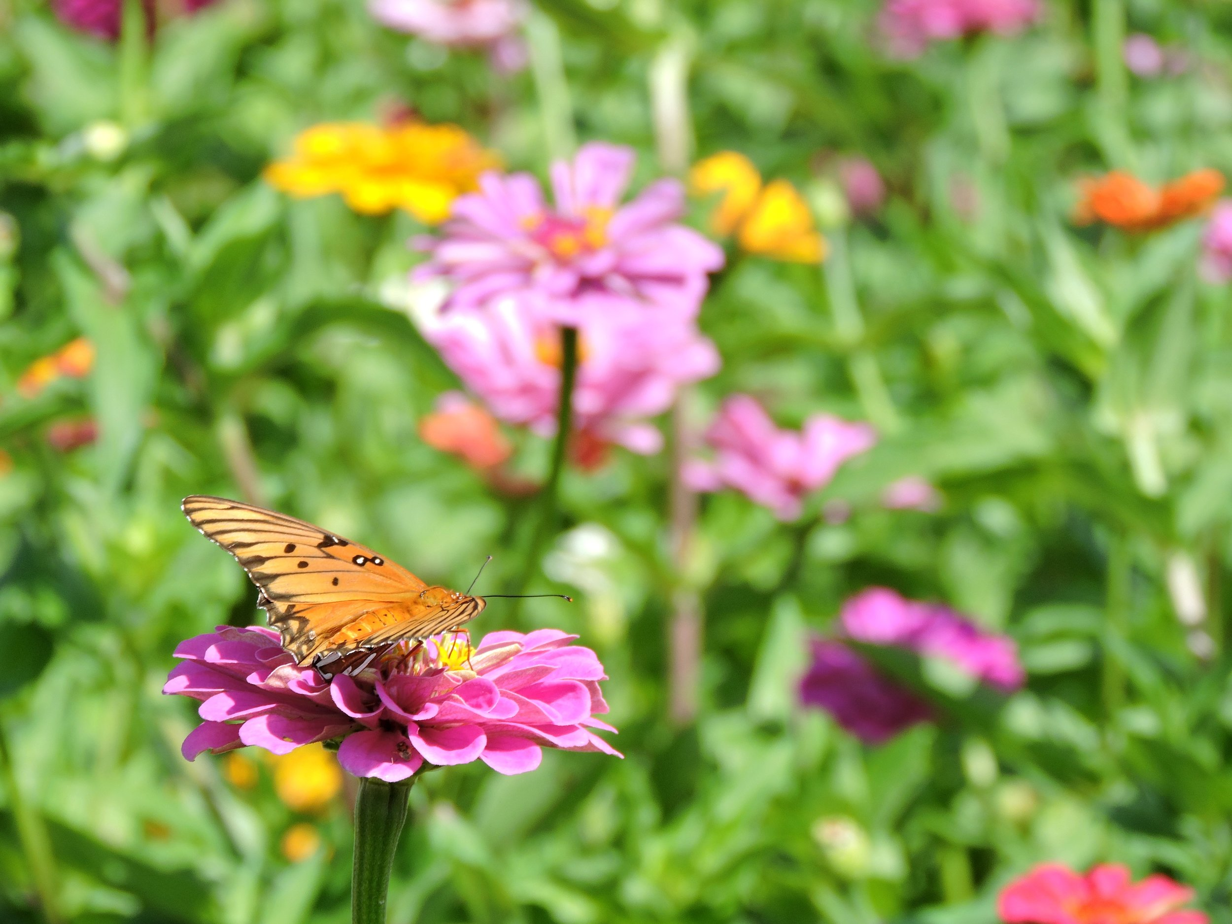 ButterflyGarden3.jpg