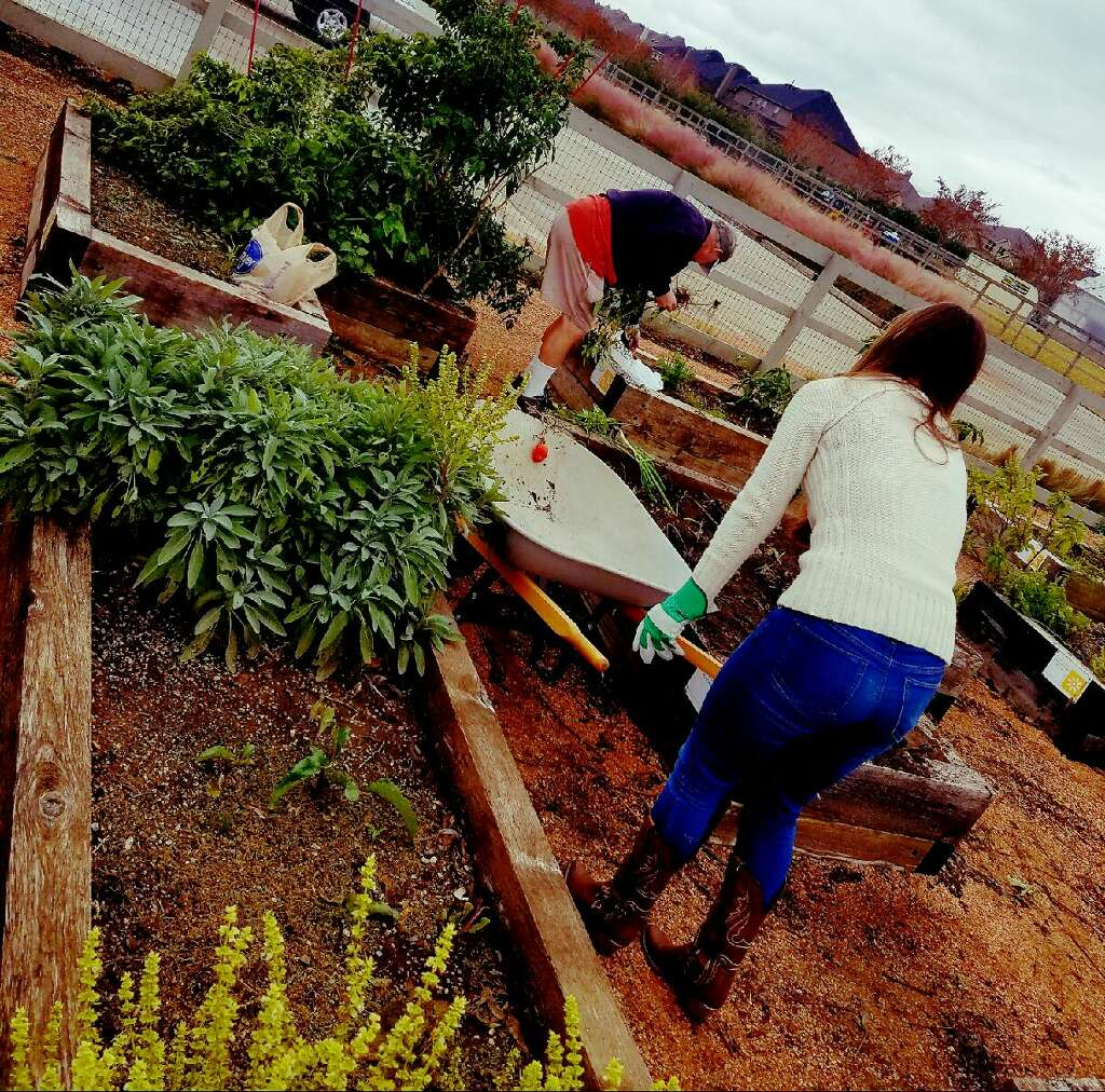 Harvest North Texas Food Bank Garden Club are prepping their beds for the winter.
