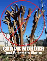 Crape Murder.jpg