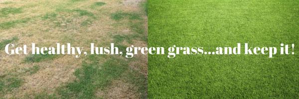 Grass(1).jpg