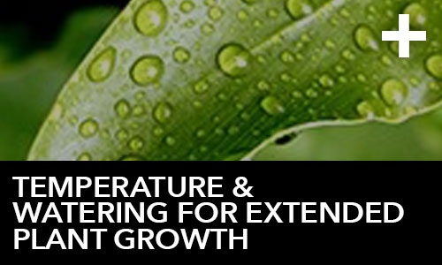 htg-info-center-ask-the-doc-articles-temperature-and-watering-for-extended-plant-growth-thumbnail.jpg
