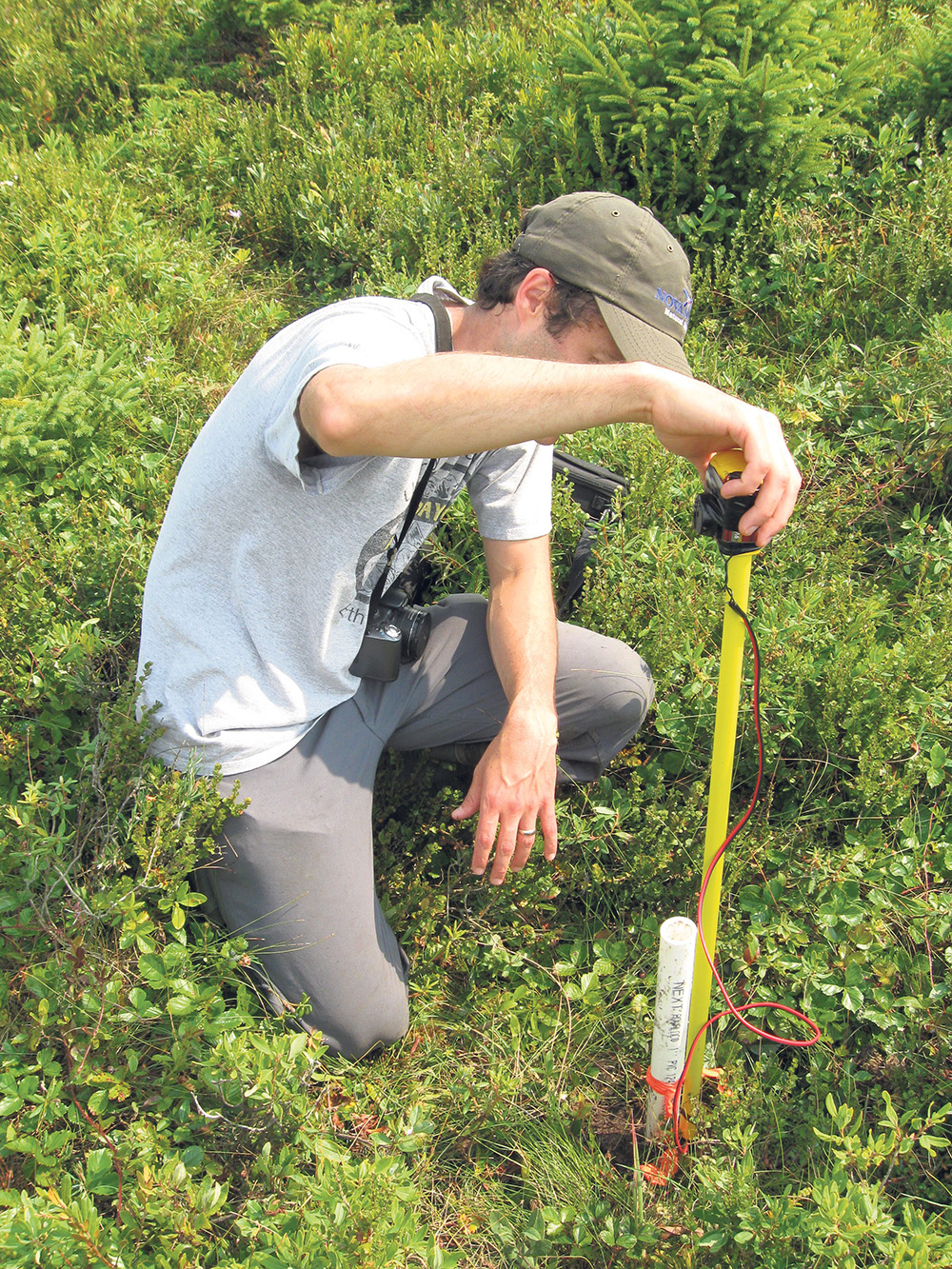 Conservation initiatives in Nova Scotia are protecting habitat for the eastern mountain avens, a plant that is found in only three locations worldwide.