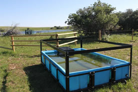 A water trough with clean water at Waterton Park Front, AB (Photo by NCC)