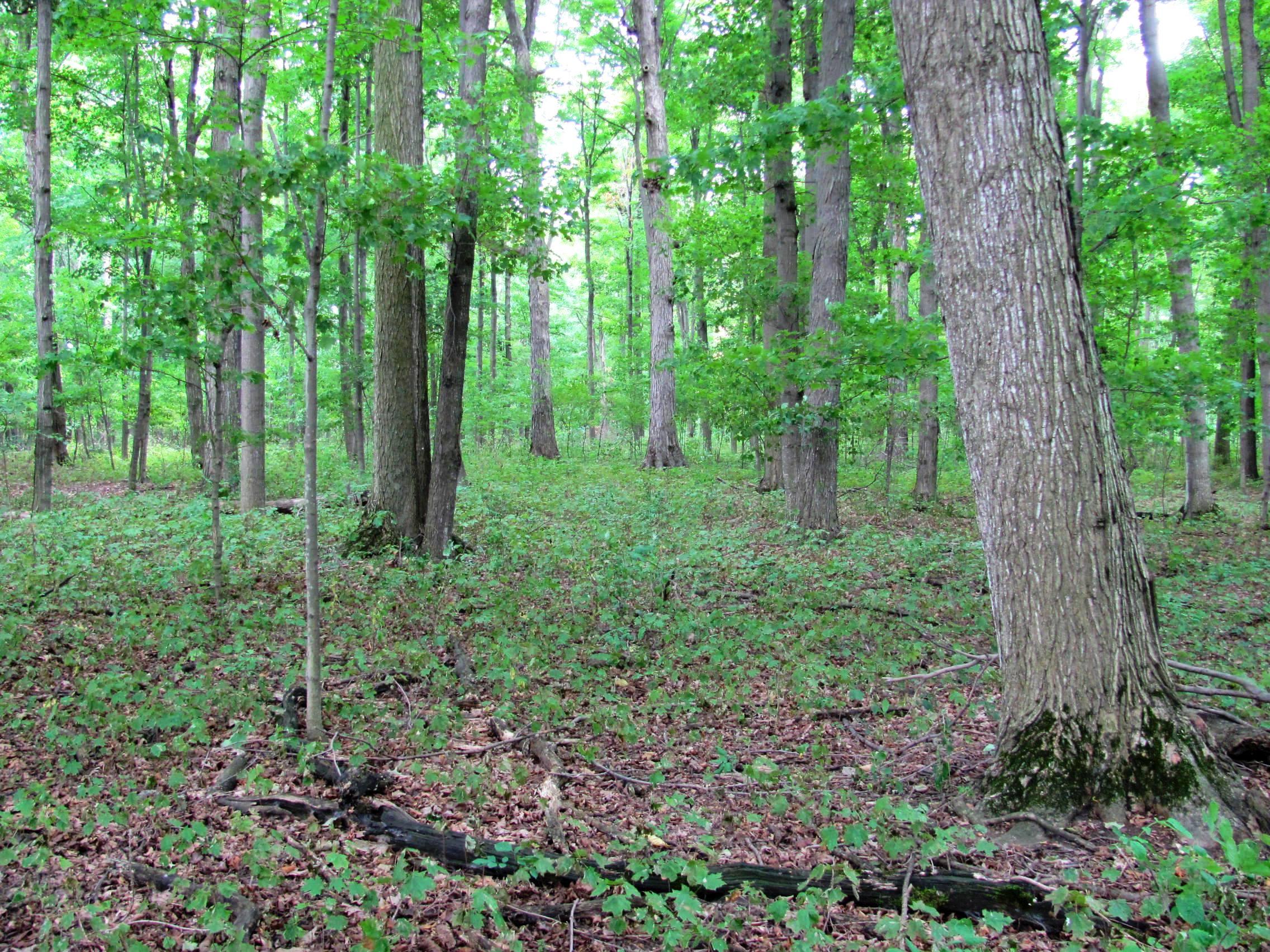 Carolinian (Deciduous) Forest Region