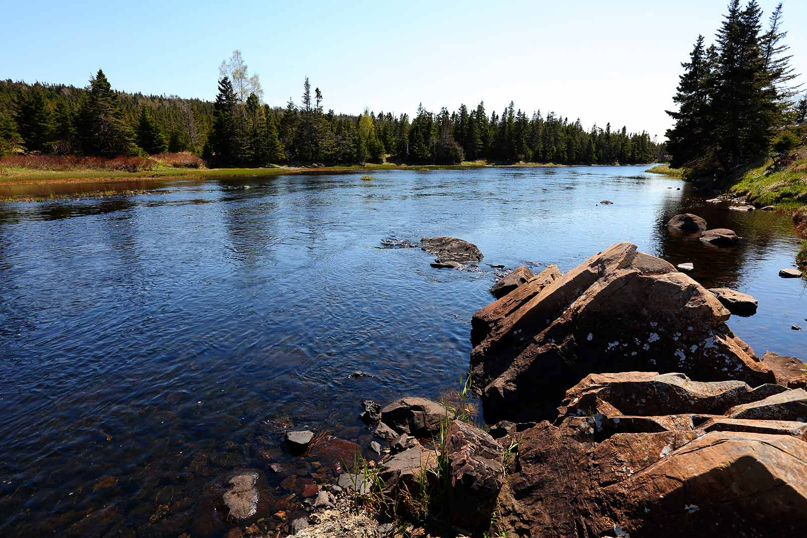 Boreal Forest - Salmonier Line, NL (Photo by Mike Dembeck)