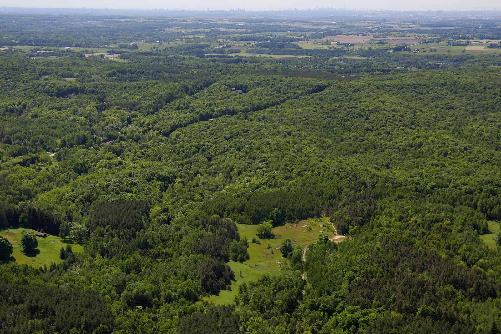 Happy Valley Forest, ON (Photo by Mike Dembeck)