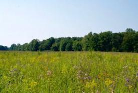 Tall grass prairie (Photo by Jenna Siu/NCC)