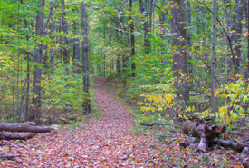 Backus Woods, Ontario (Photo by NCC)