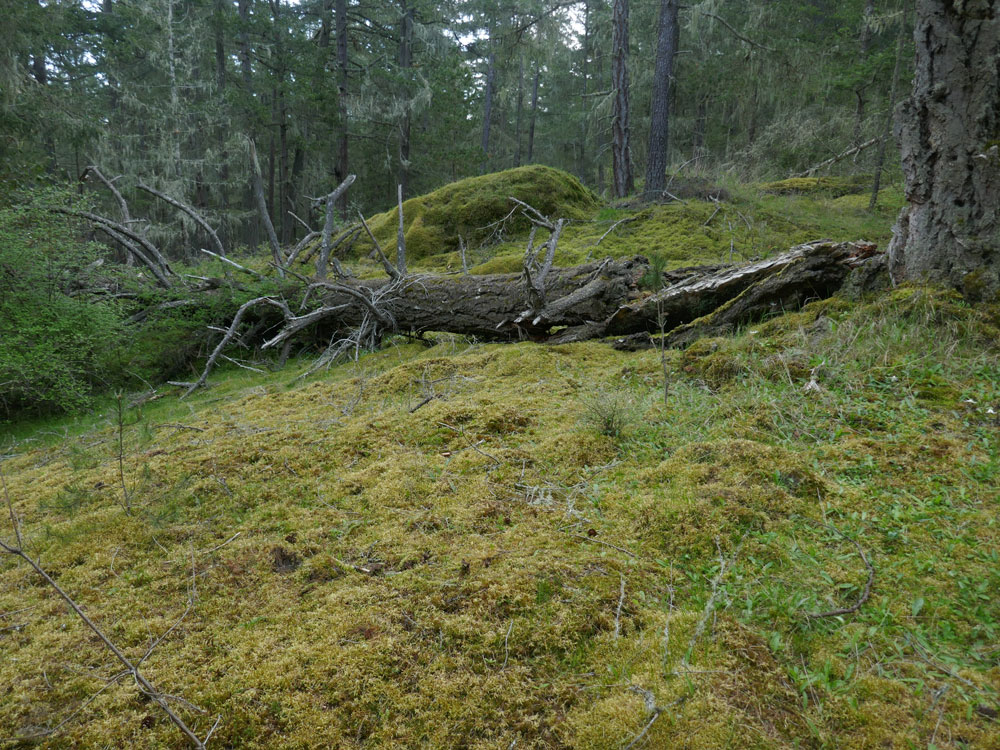 Bedrock outcrop covered with moss