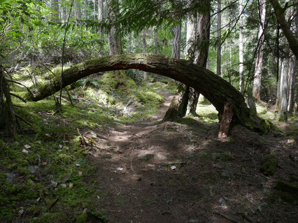 "There are a few ""low bridges"" on the trail so watch your head"
