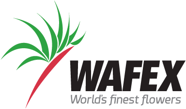 wafex.png