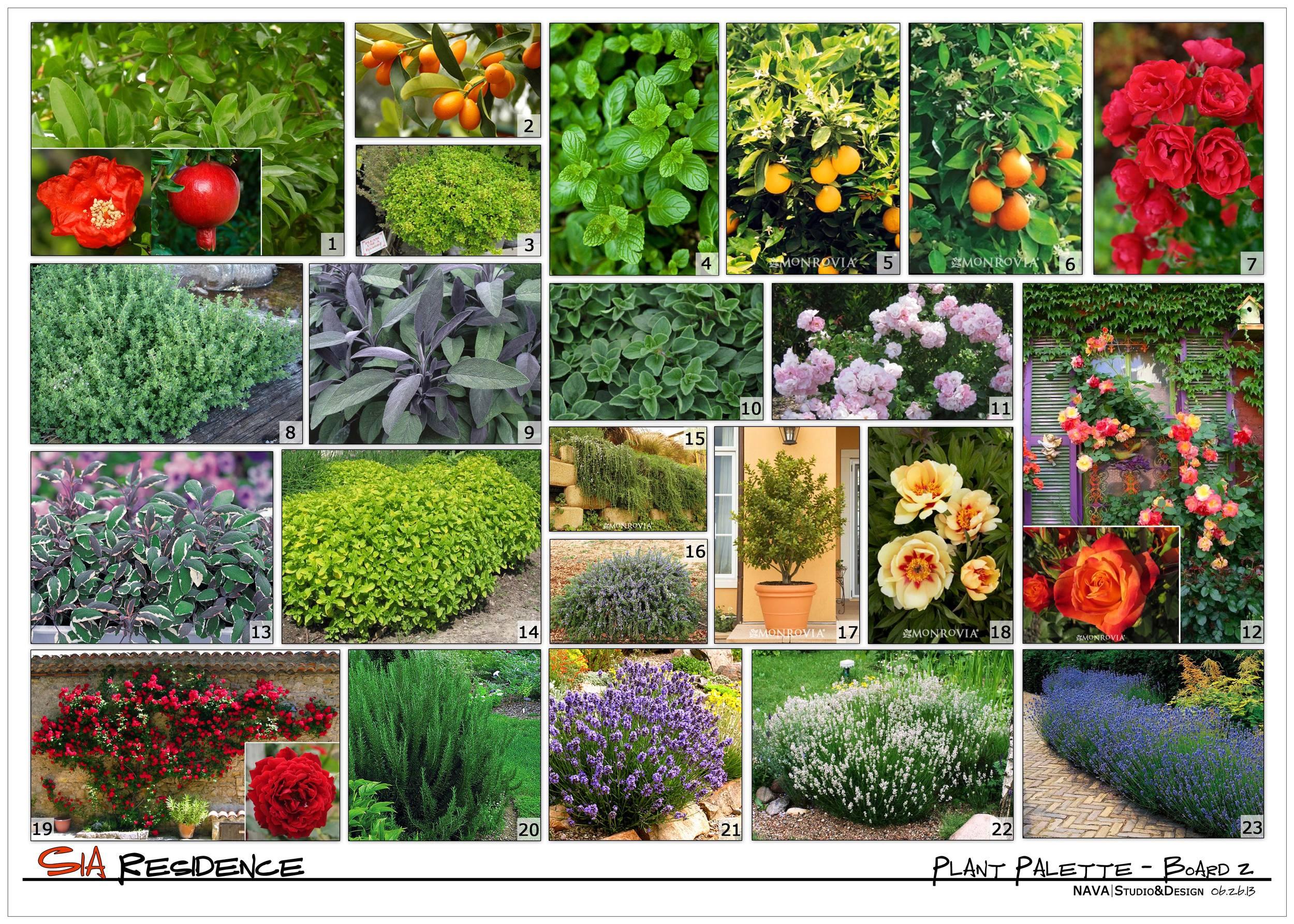 Conceptual Plant Palette_Board 2.jpg