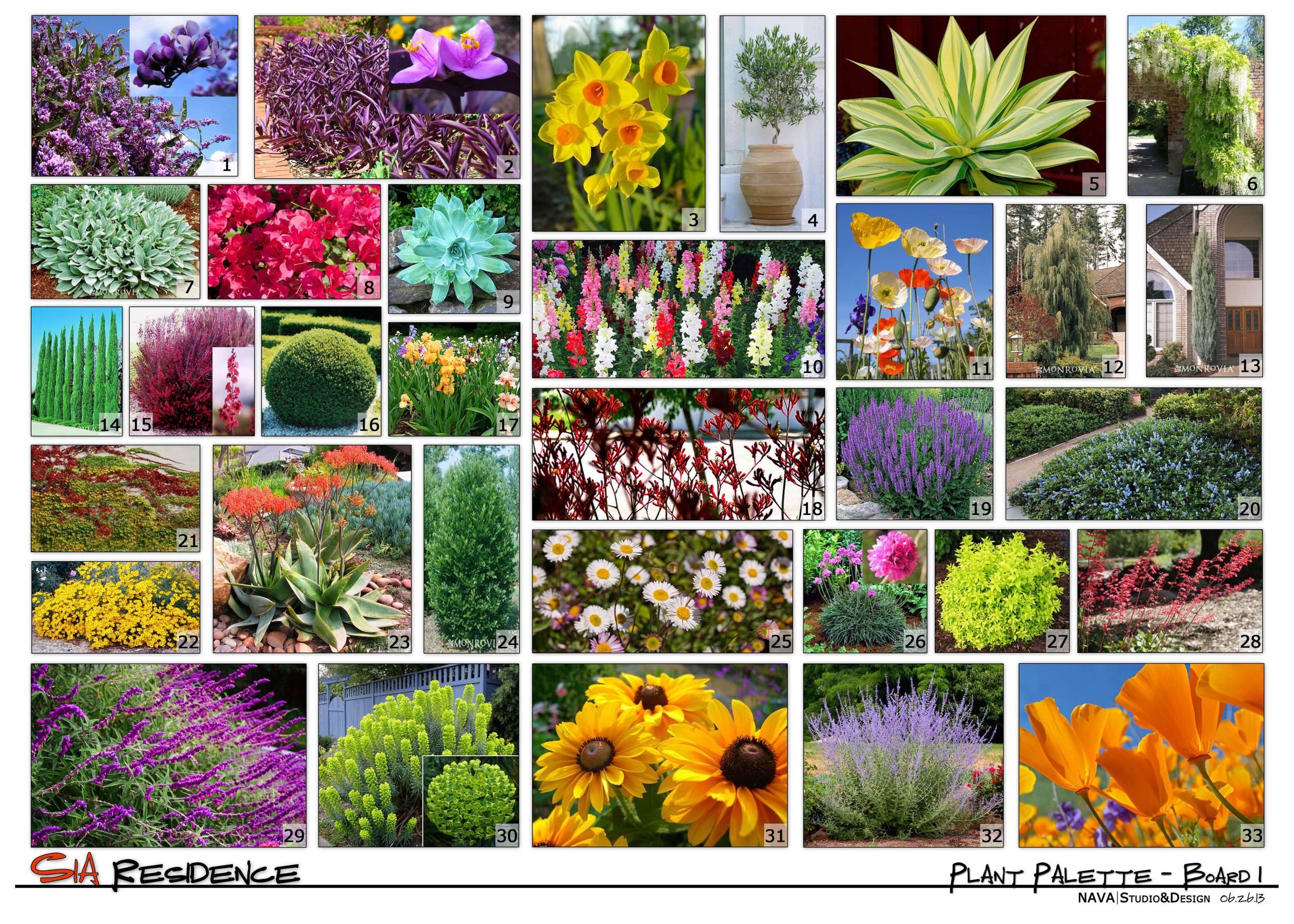 Conceptual Plant Palette_Board 1.jpg