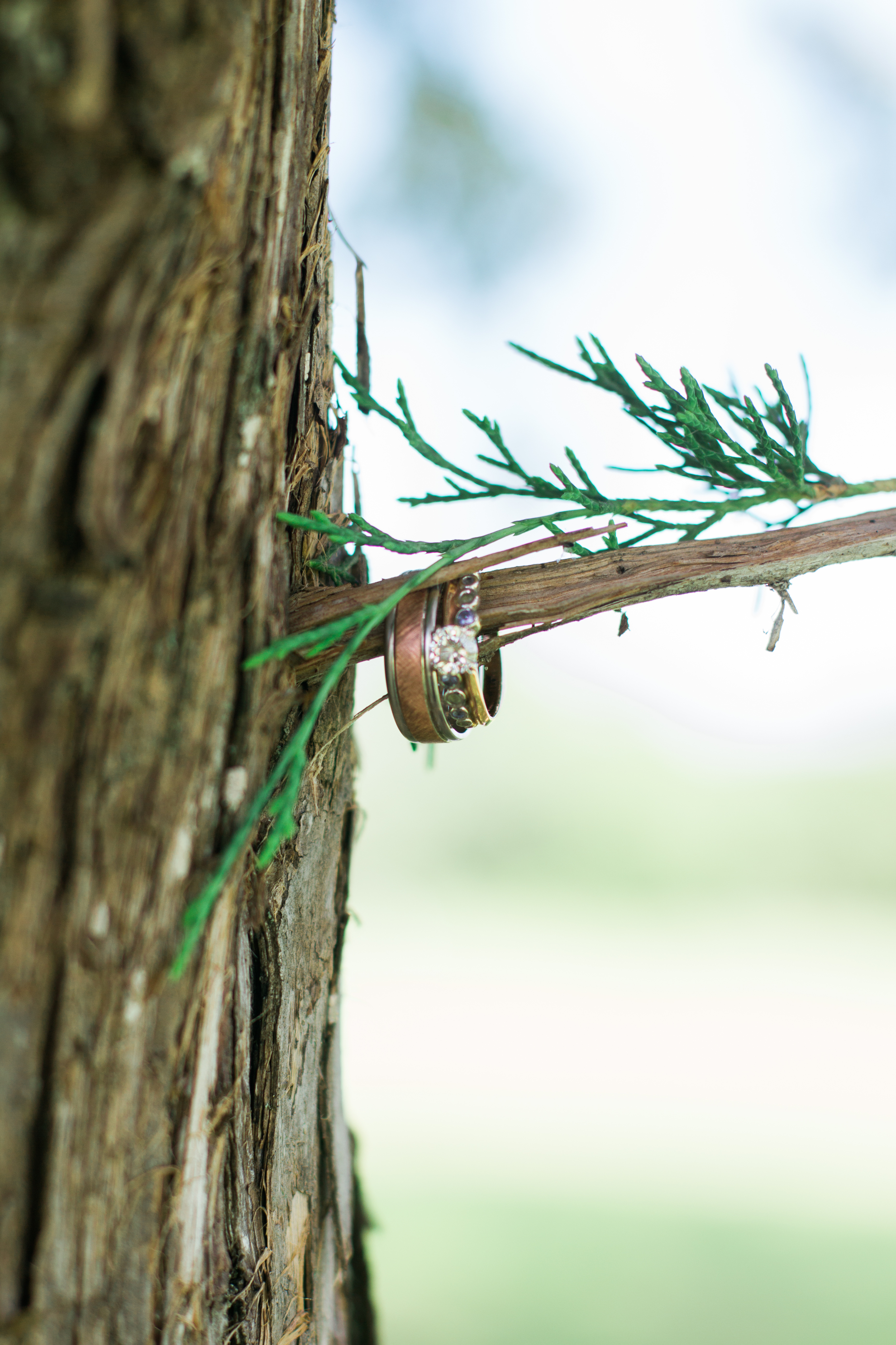 Wedding ring shot of rustic wedding in Minnesota at Afton Alps with evergreen tree and bark