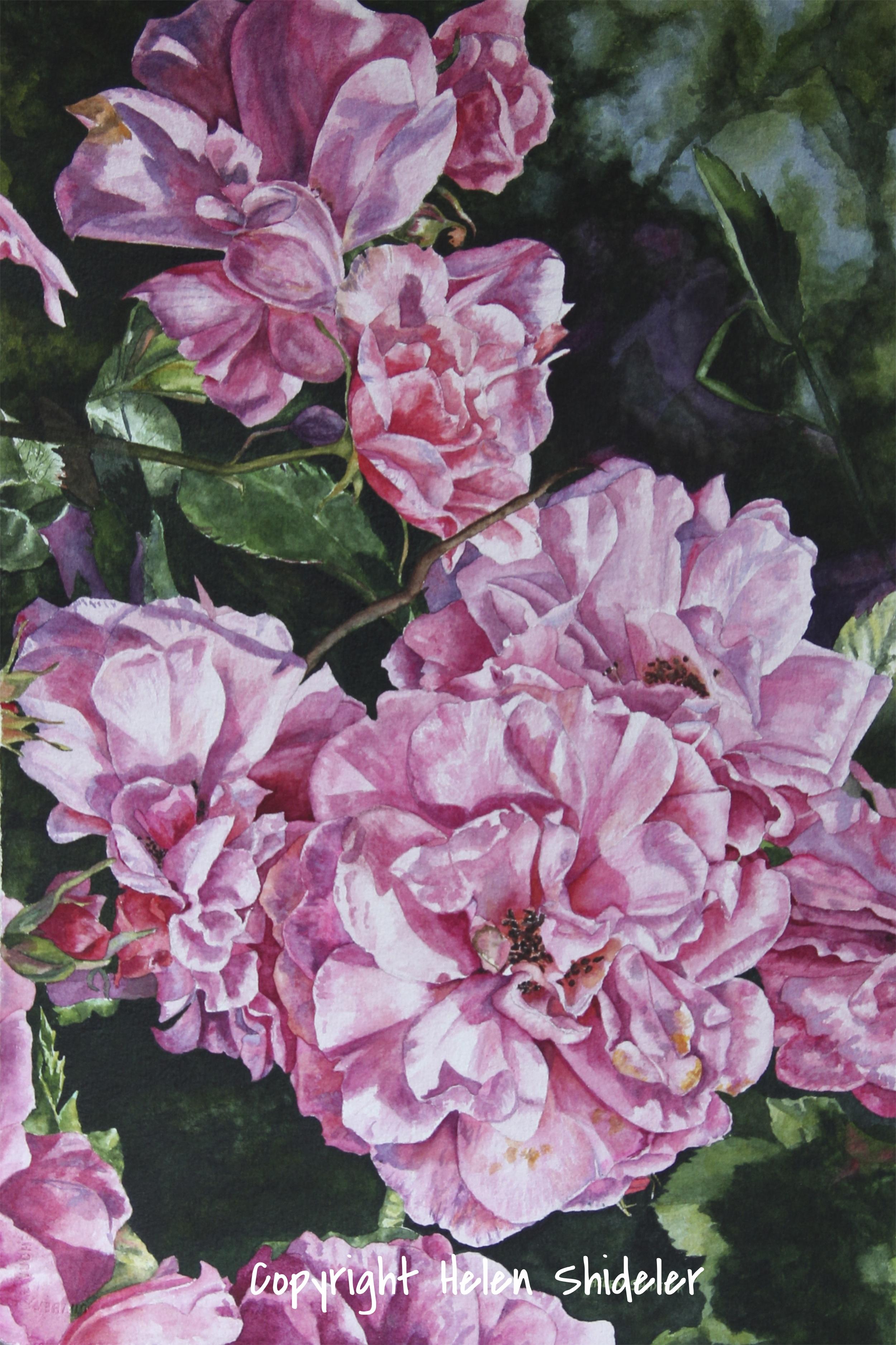 Height of Summer watercolour by Helen Shideler