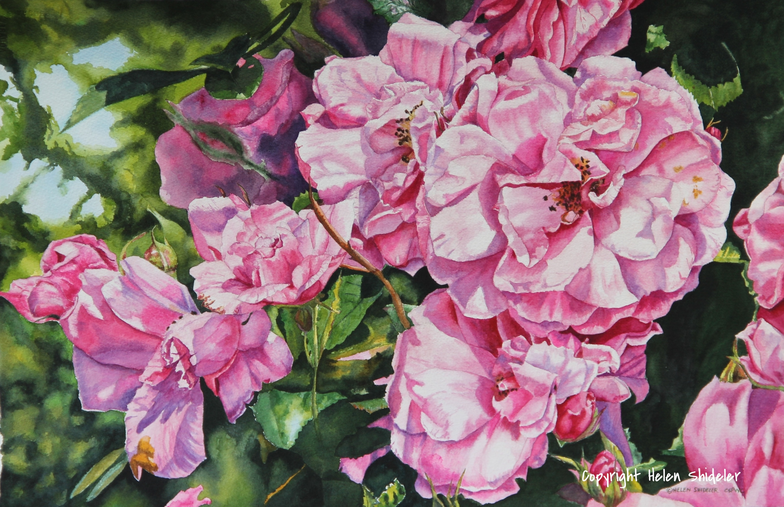 Pretty in Pink watercolour by Helen Shideler