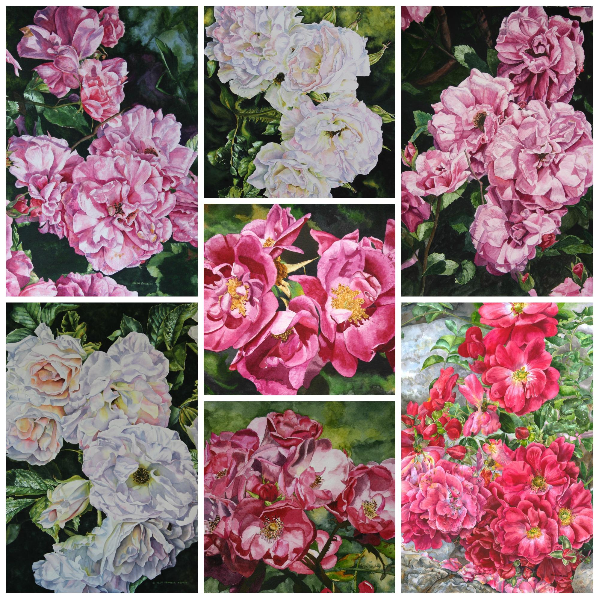Water color roses by Helen Shideler